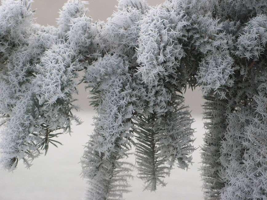 Ледяное вдохновение - 23 фото интересных образований изо льда