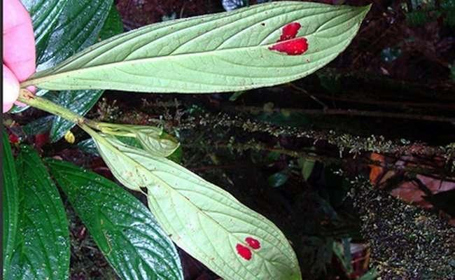 Романтичное растение